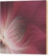 Pink And White Flower 0610 Wood Print