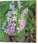Pink And White Flowers Wood Print