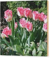 Pink And White Fringed Tulips Wood Print