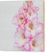 Pink And White Gladiola Wood Print