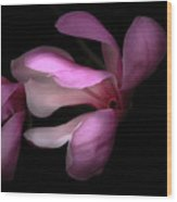 Pink And White Magnolia In Silhouette Wood Print
