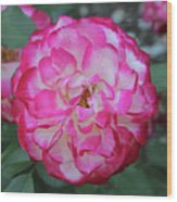 Pink And White Rose Square Wood Print