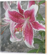 Pink And White Stargazer Lily In A Garden Wood Print