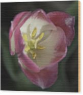 Pink And White Tulip Center Squared 2 Wood Print