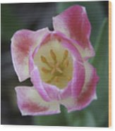 Pink And White Tulip Center Squared Wood Print