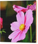 Pink And Yellow Cosmo Wood Print