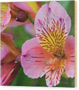 Pink And Yellow Flora Wood Print