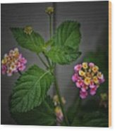 Pink And Yellow Flowers Wood Print