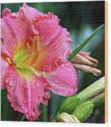 Pink And Yellow Lily After Rain Wood Print