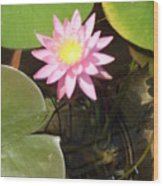 Pink And Yellow Lotus Flower Wood Print