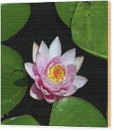 Pink And Yellow Lotus Waterlily Wood Print