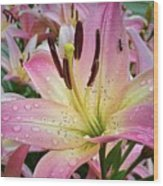 Pink And Yellow Mountain Lily Wood Print
