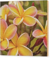 Pink And Yellow Plumeria 2 Wood Print