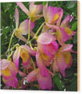 Pink And Yellow Tropical Flowers Wood Print