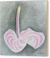 Pink Anthurium Wood Print