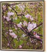 Pink Aplle Blossoms Of Spring Time Wood Print