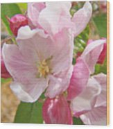Pink Apple Blossoms Art Prints Spring Trees Baslee Troutman Wood Print