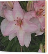 Pink Asiatic Lilies 1 Wood Print