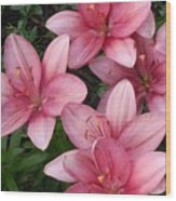 Pink Asiatic Lilies 2 Wood Print