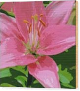 Pink Asiatic Lily Wood Print