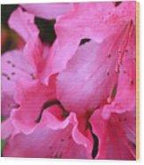 Pink Azalea Drama Wood Print