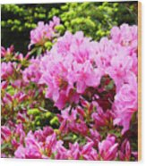 Pink Azalea Flowers Landscape 11 Art Prints Canvas Artwork Framed Art Cards Wood Print