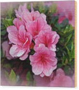 Pink Azaleas Wood Print by Sandy Keeton