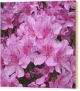 Pink Azaleas Summer Garden 6 Azalea Flowers Giclee Art Prints Baslee Troutman Wood Print
