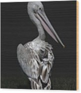 Pink-backed Pelican Rear View Wood Print