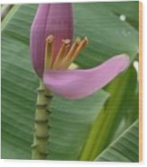 Pink Banana Flower Wood Print