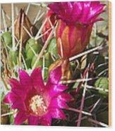 Pink Barrel Cactus Flowers Wood Print