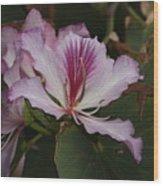Pink Bauhinia Flower Wood Print
