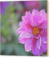 Pink Beauty Wood Print by Becky Lodes