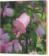 Pink Bell Wood Print