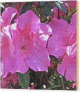 Pink Bevy Of Beauties Wood Print