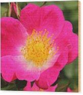 Pink Bloom Wood Print
