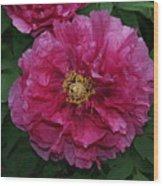 Pink Bloom Peony Tree Wood Print