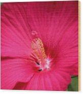 Pink Bloomers Wood Print