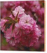 Pink Blooms Wood Print
