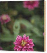 Pink Blossom Wood Print