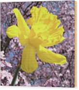Pink Blossom Spring Trees Yellow Daffodil Flower Baslee Troutman Wood Print