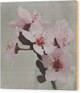 Pink Blossoms 1- Art By Linda Woods Wood Print