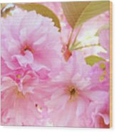 Pink Blossoms Art Prints Canvas Spring Tree Blossoms Baslee Troutman Wood Print