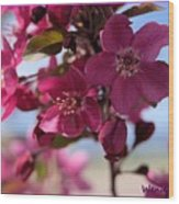 Pink Blossoms Wood Print