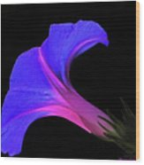 Pink Blue Flower Wood Print by Chaza Abou El Khair