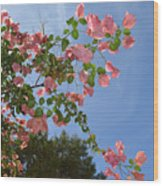 Pink Bougainvillea Wood Print