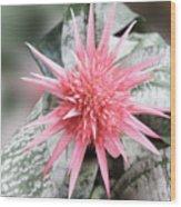 Pink Bromeliad Wood Print