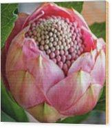 Pink Bud Waratah Wood Print