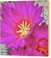 Pink Cacti Flowers Wood Print