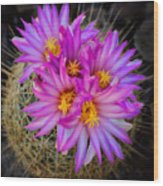 Pink Cactus Flowers Square  Wood Print